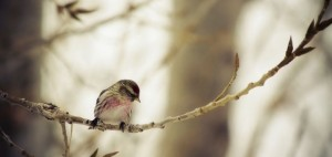 sparrow-720x340